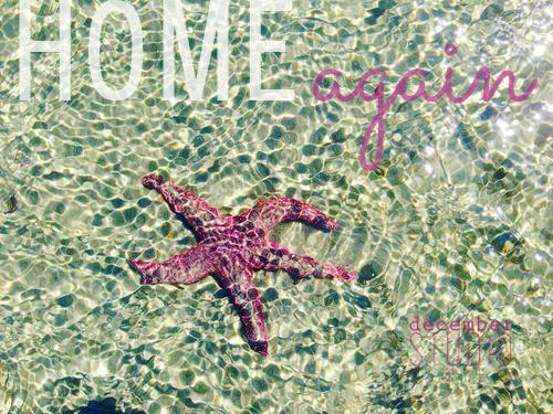 Starfishhornby